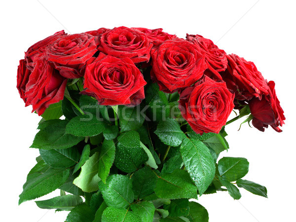 Red wet roses flowers bouquet isolated on white background Stock photo © photocreo