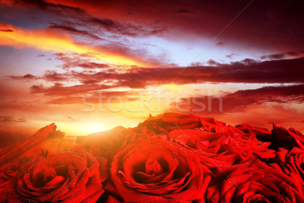 Red wet roses flowers on dramatic, romantic sunset sky Stock photo © photocreo
