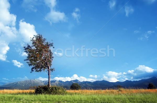Mountains landscape Stock photo © photocreo