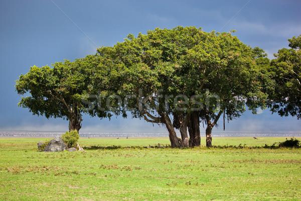 Baum Savanne Tansania Afrika Landschaft Krater Stock foto © photocreo