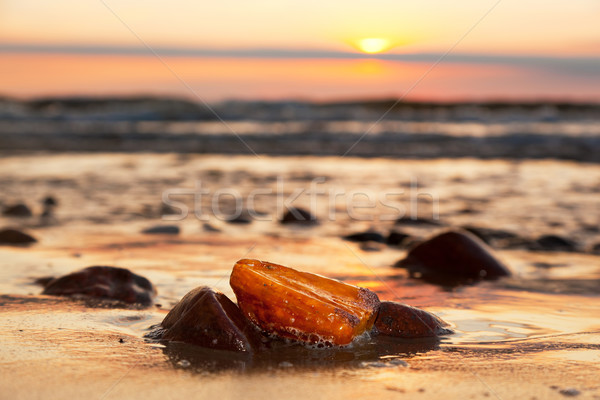 Amber stone on the beach. Precious gem, treasure. Baltic Sea Stock photo © photocreo
