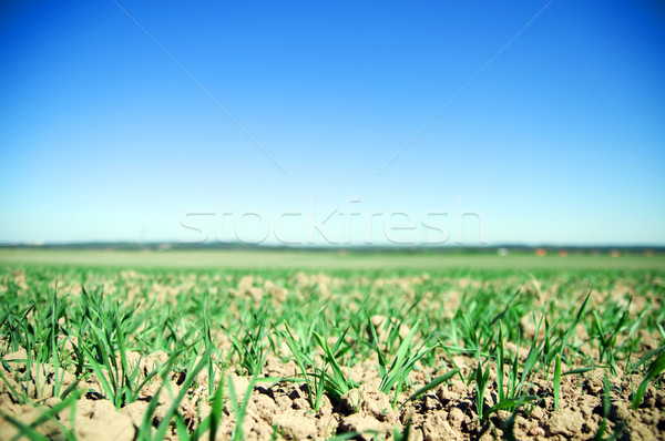 Domaine agricole fertile sol fleur nature Photo stock © photocreo
