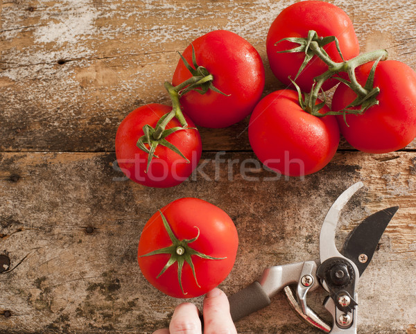 Freshly harvested ripe red grape tomatoes Stock photo © photohome