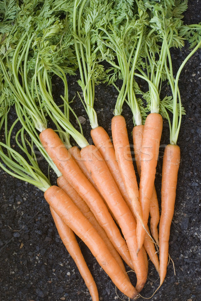 Bunch Of Fresh Carrots Stock photo © photohome