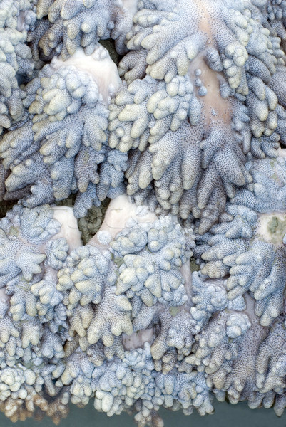 soft coral texture Stock photo © photohome