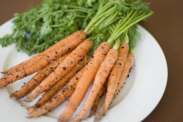 Freshly harvested carrots from the garden Stock photo © photohome