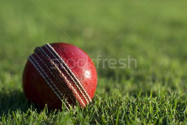赤 クリケット ボール 緑の草 サイド ストックフォト © photohome