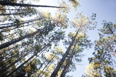 Néz inspiráció természet alulról fotózva kilátás magas Stock fotó © photohome