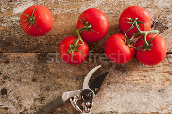 Garden fresh tomatoes with pruning shears Stock photo © photohome