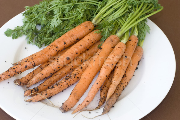 Carrots recently pulled from ground on plate Stock photo © photohome
