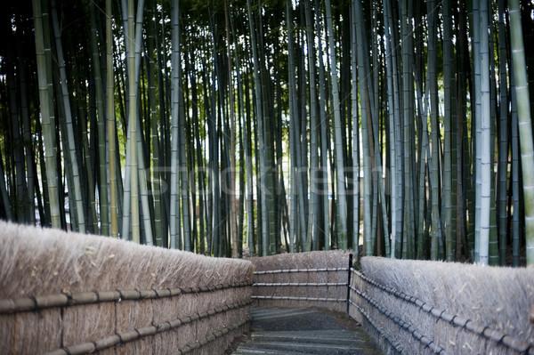 Bambu orman kyoto Japonya tapınak seyahat Stok fotoğraf © photohome