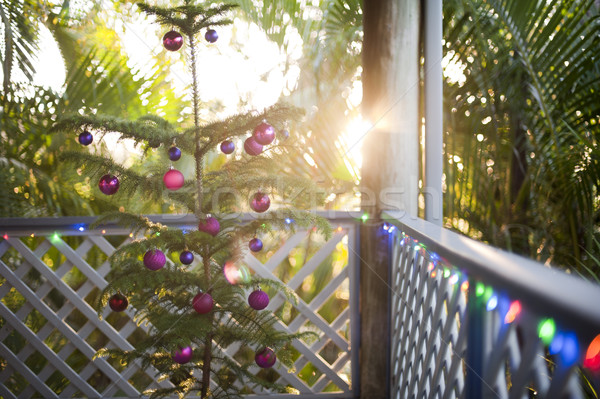 Trópusi karácsony ünneplés természetes fenyőfa díszített Stock fotó © photohome
