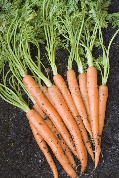 Frescos zanahorias fuera suelo verde Foto stock © photohome