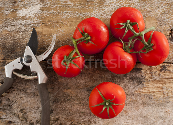 Freshly picked home grown tomatoes Stock photo © photohome