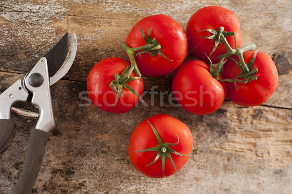 Freshly picked tomatoes off the vine Stock photo © photohome