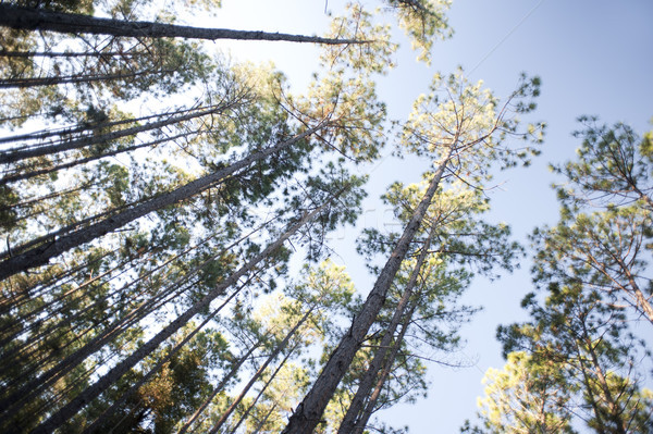 Tarla ağaçlar mavi yaz Stok fotoğraf © photohome
