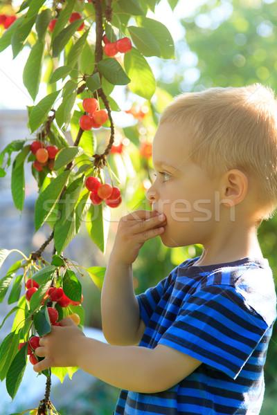 Młodych dziecko w górę wiśni drzewo Zdjęcia stock © Photoline