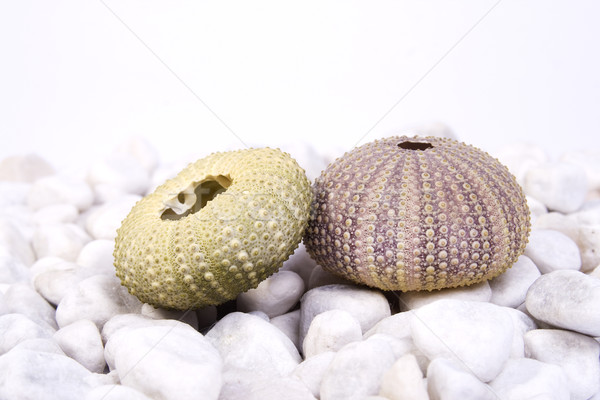 Stock photo: Sea urchin