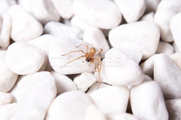 Fehér kő barna pók tengerpart Stock fotó © Photoline
