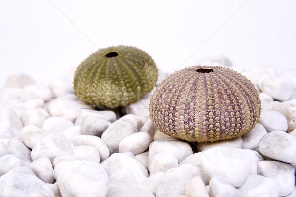 Morza dwa zielone różowy biały kamienie Zdjęcia stock © Photoline