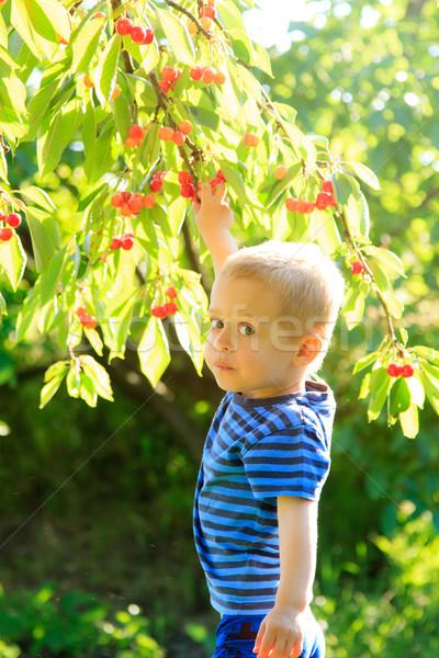 Stock fotó: Fiatal · gyermek · szőlőszüret · felfelé · anime · fa