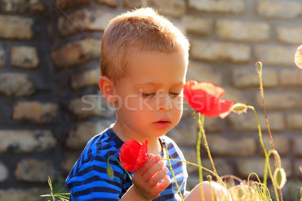 Kicsi fiú megvizsgál pipacsok kőfal tavasz Stock fotó © Photoline