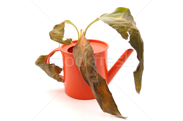 Sprinkling pot with dry plant Stock photo © Photooiasson