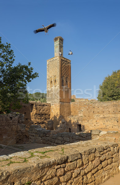 Minaret of Chellah necropolis. Rabat. Morocco. Stock photo © Photooiasson