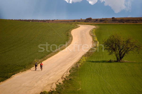 Olive tree in the field and bicycles in route Stock photo © Photooiasson