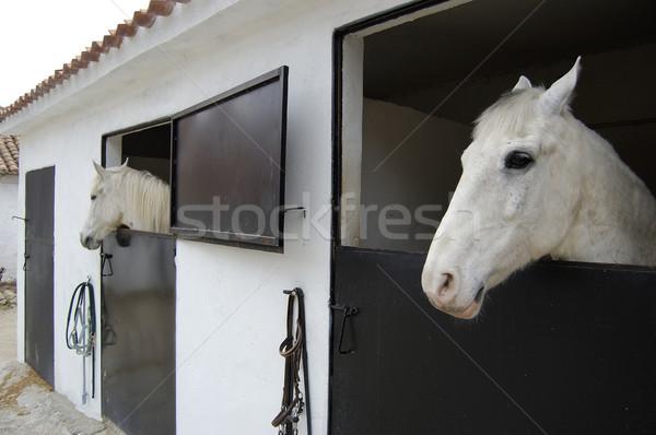 ムスタング 白 草 速度 動物 ストックフォト © Photooiasson