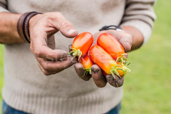 手 若い男性 収穫 成熟した トマト 野菜 ストックフォト © Photooiasson
