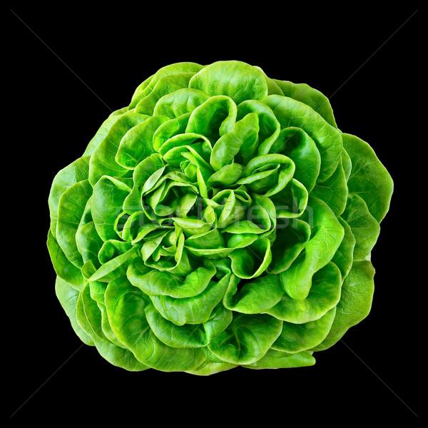 Batavia lettuce. Stock photo © Photooiasson