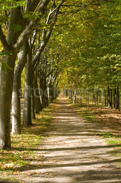 Mediterrán erdő ősz út fű út Stock fotó © Photooiasson