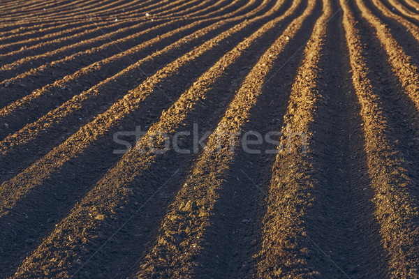 Rows pattern in a plowed field Stock photo © photosebia