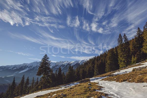 луговой парка Румыния Солнечный альпийский зима Сток-фото © photosebia