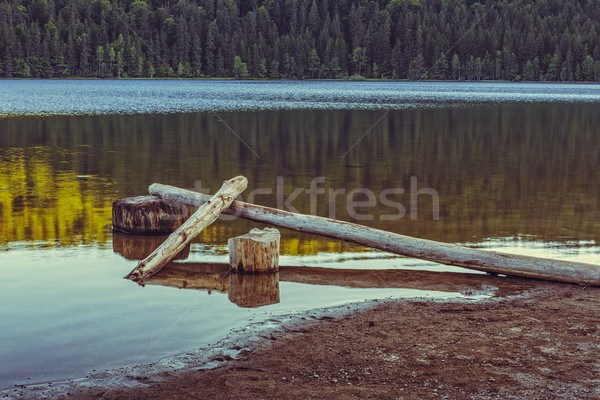 Lake scenery with fallen peeled trees Stock photo © photosebia