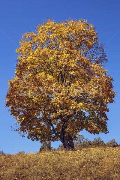 Autumn colors Stock photo © photosebia
