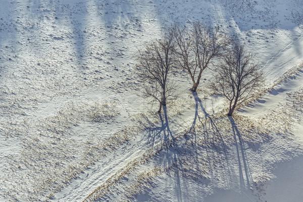 Solidão idílico inverno cenário três desfolhada Foto stock © photosebia