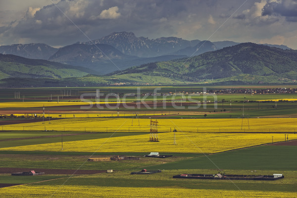 Champs montagne paysage pittoresque vaste jaune Photo stock © photosebia