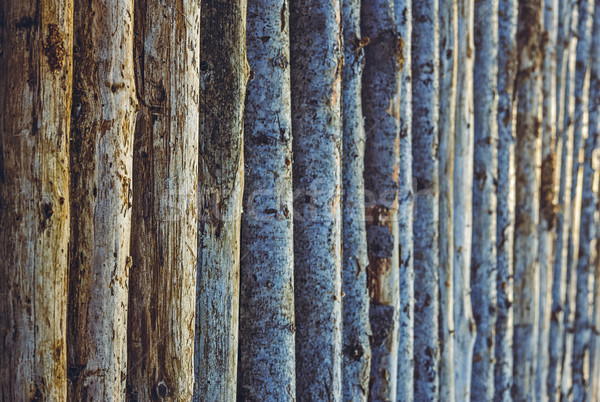 Stock photo: Aligned tree trunks