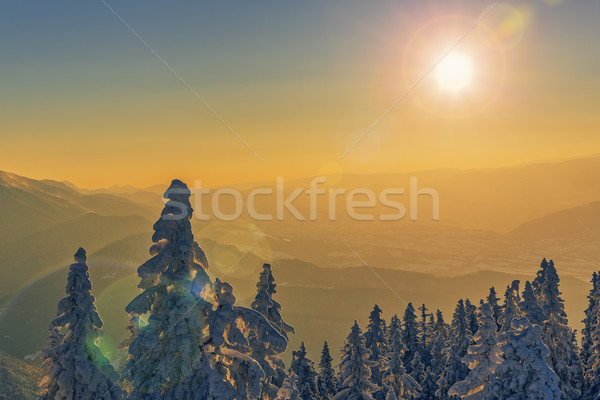 Idyllic winter sunset scenery Stock photo © photosebia
