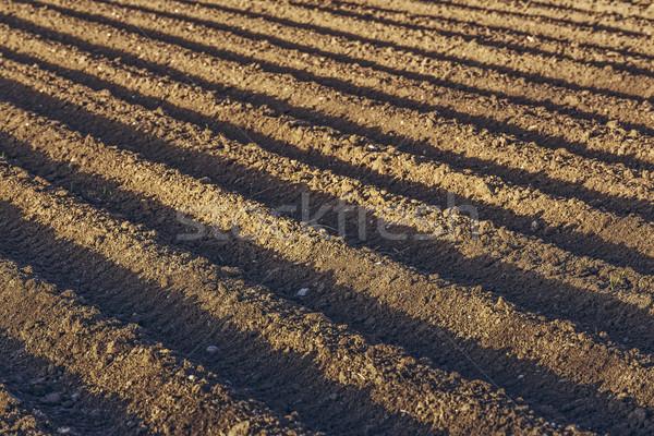 области шаблон почвы картофель зерновые Сток-фото © photosebia