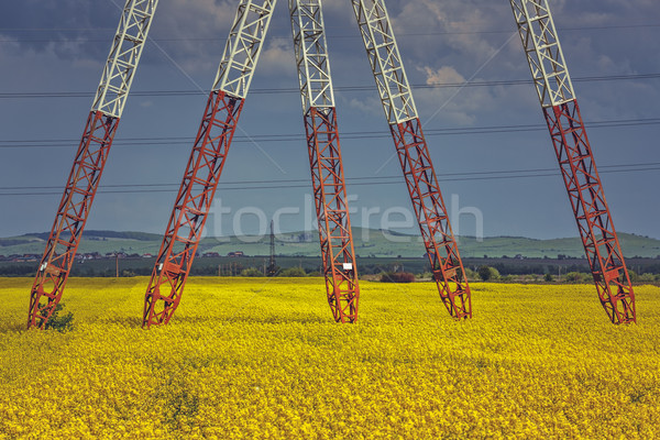 Power pole pylons in rapeseed field Stock photo © photosebia