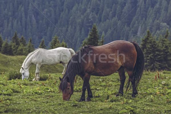 ücretsiz atlar yukarı dağlar Romanya Stok fotoğraf © photosebia