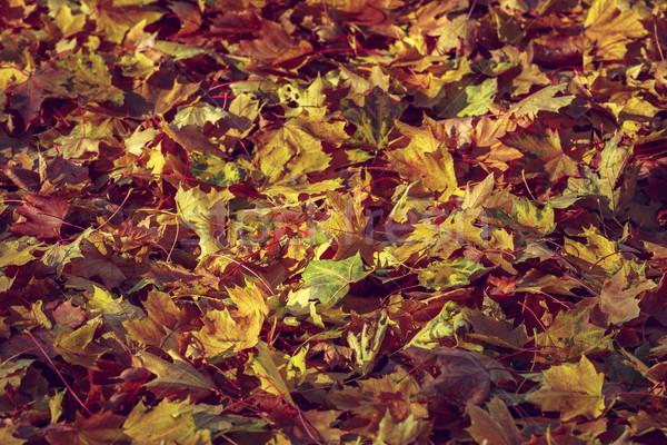 красочный текстуры дерево фон красный Сток-фото © photosebia