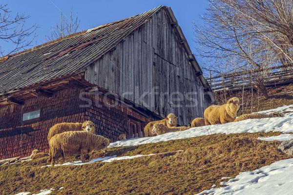 Bois hutte moutons ensoleillée traditionnel Photo stock © photosebia
