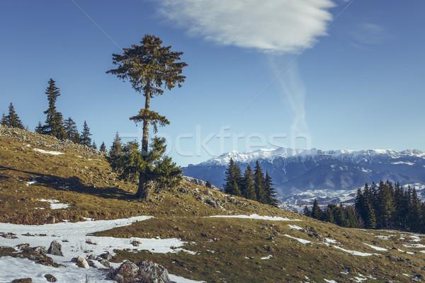 Bucegi mountains seen from Zanoaga meadow, Piatra Craiului Natio Stock photo © photosebia