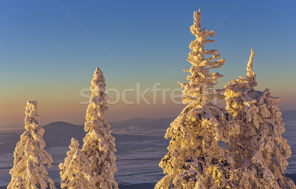 Idyllic wintry sunset scenery Stock photo © photosebia