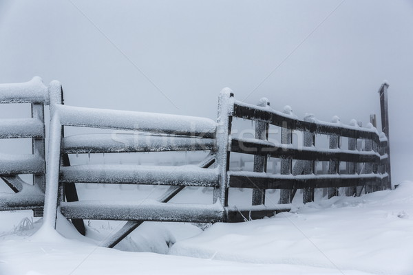 Frozen hoarfrost wooden fence Stock photo © photosebia