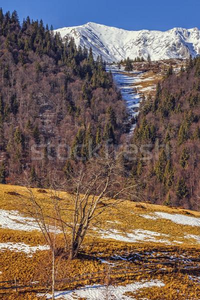 Naturale riserva Romania montagna coperto neve Foto d'archivio © photosebia